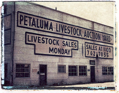 Livestock_auction.jpg